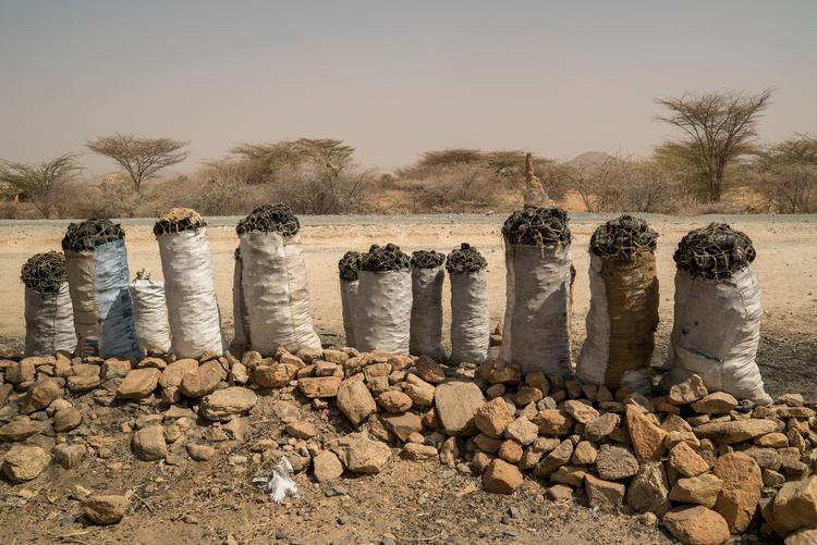 全球气候变暖,非洲那些穷人受到了怎样的影响?