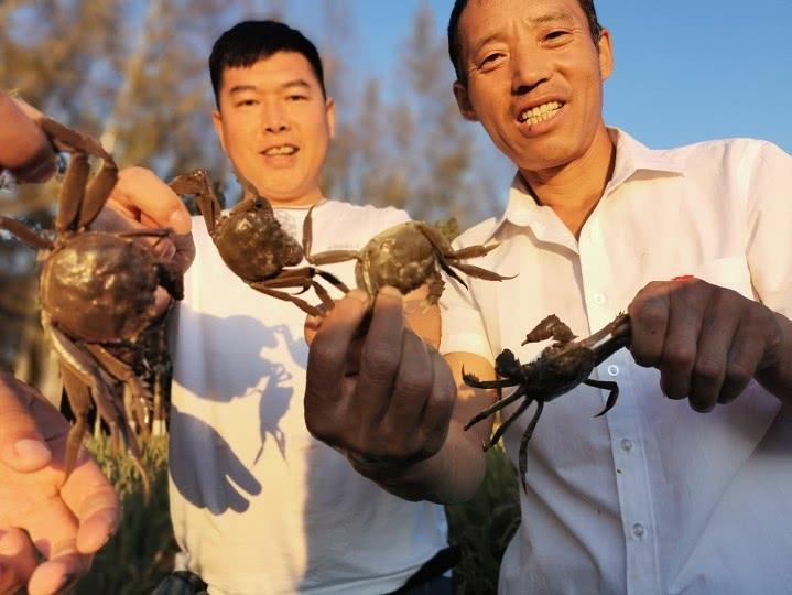 北大荒股份青龙山分公司发展立体生态种养殖模式富裕员工