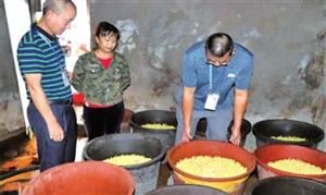 普洱市专项整治豆芽菜质量