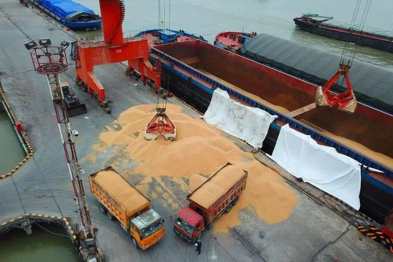 ▲江苏南通一处港口正在卸装进口大豆。(美联社)