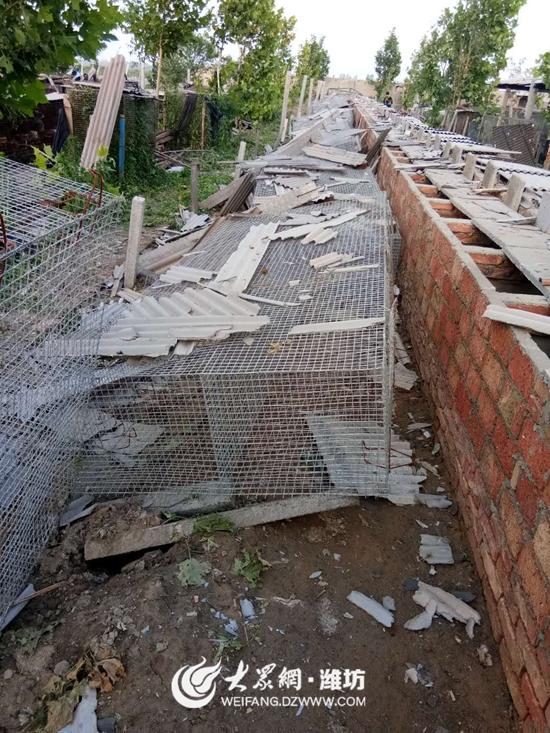 大风冰雹来袭 潍坊一养殖合作社近8000只狐狸丧命