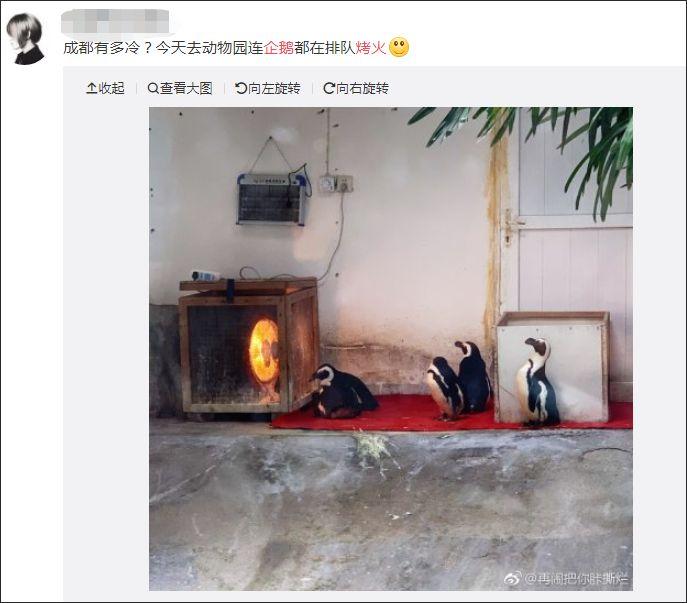 趣闻   成都有多冷?动物园的企鹅都要排队烤火!网友:实锤了,比南极还冷! 企鹅 
