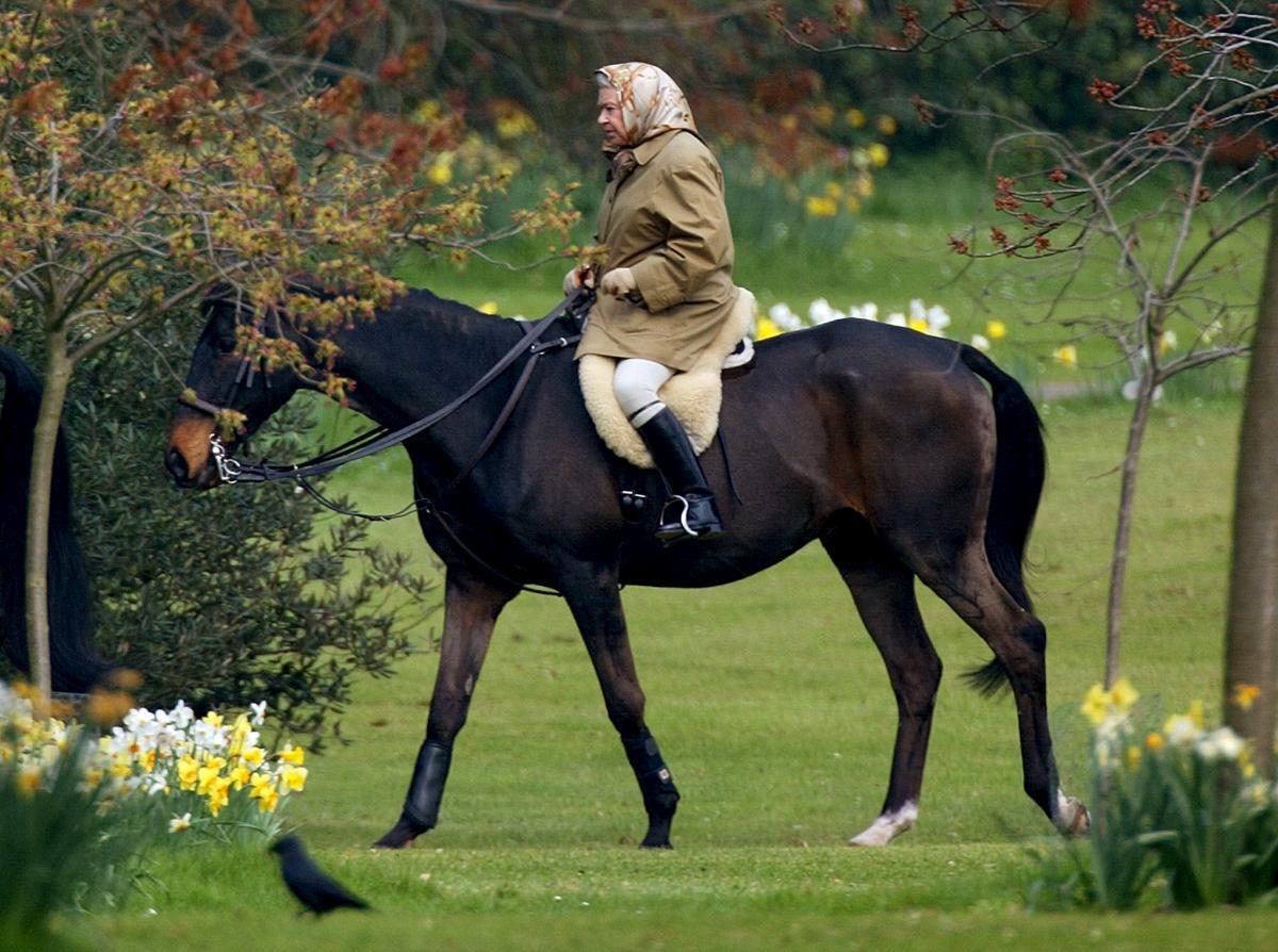 女王骑马照。