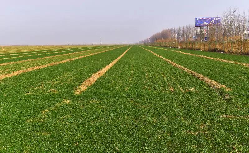雄安将试点土壤污染防治 年底建立污染地块名录星穹战马