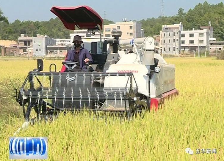 免费收割!五华大昌粮贸现代化农机服务队助力农民水稻收割