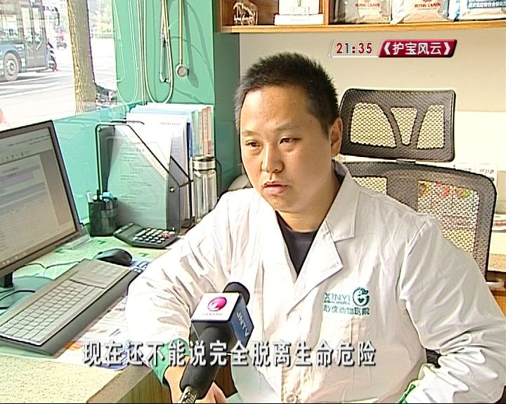 """凤凰新华网注册登录-进博会上的中国农民画:让""""中国风""""吹得更劲"""