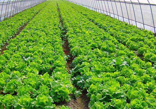 南京首个市级农业产业化联合体在溧水成立