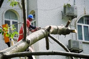 台风后树根不稳 市民出行需留心