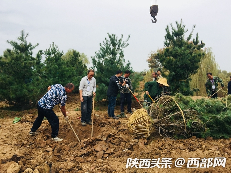 长安区违建别墅拆除项目复绿工程启动 将打造成森林公园