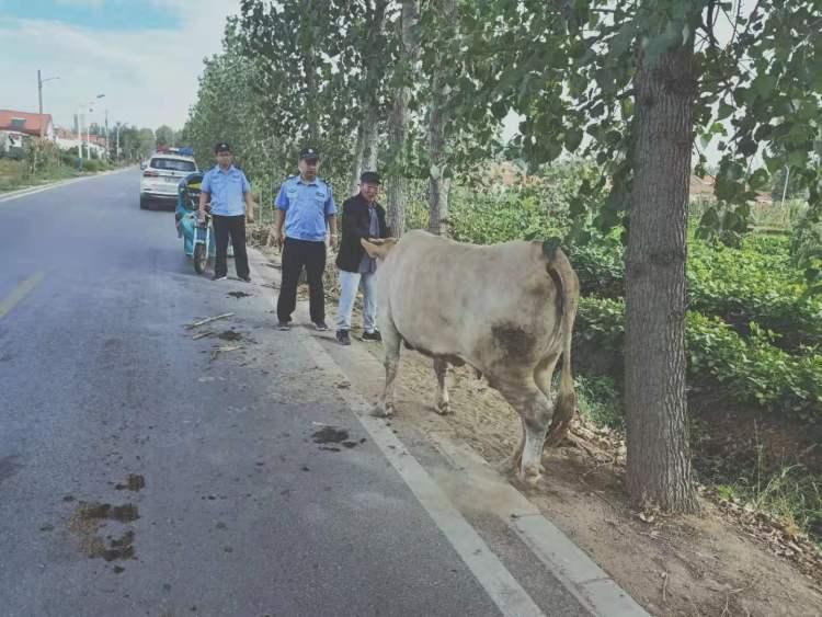 价值2万黄牛跑丢了, 民警发朋友圈找主人