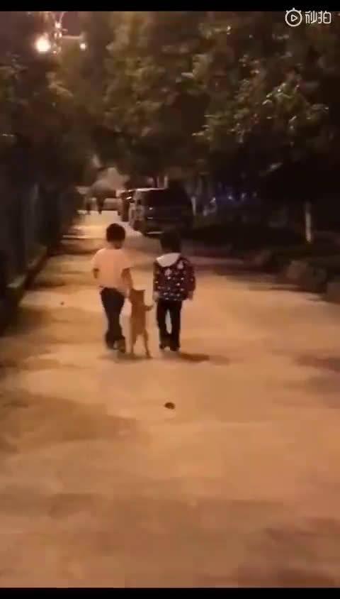 昨晚在路上看到两位小朋友遛狗