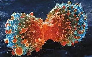 癌细胞杀死人类之后,自己也会死亡,癌细胞为什么要这样做?