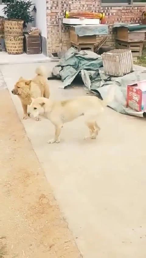 不同年代的蹦迪方式,村里唯一去过夜场的狗子