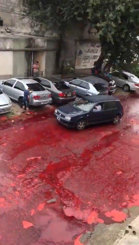 这是一条有味道的视频:阿根廷布宜诺斯艾利斯一处屠宰场,用来存