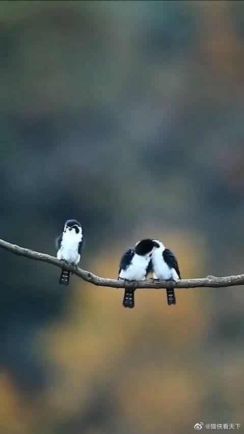 鸟:bird:: 太过分了 我呸……