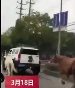 土豪开悍马在公路上遛马?警方已找到当事人(图)冷王的爬墙丑妃