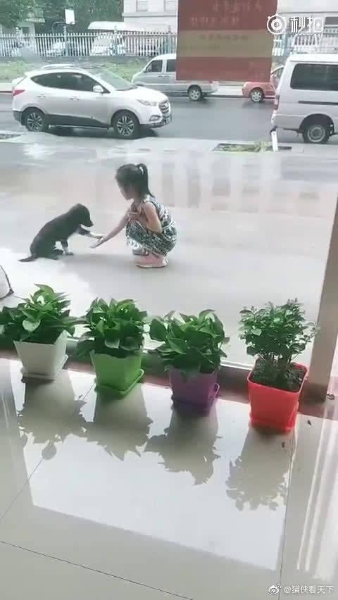 """从宠物店出来,看到如此和谐的画面,想到一句话""""细菌不可怕"""