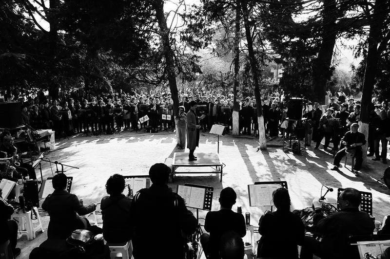 兴庆公园里的合唱团:千余老人雪松下合唱10年