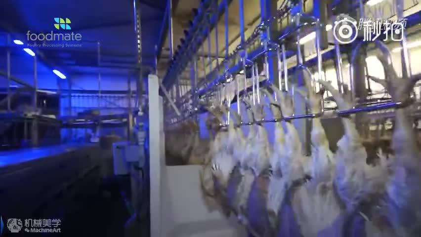 德国全自动化杀鸡,活鸡进去,鸡腿鸡块出来