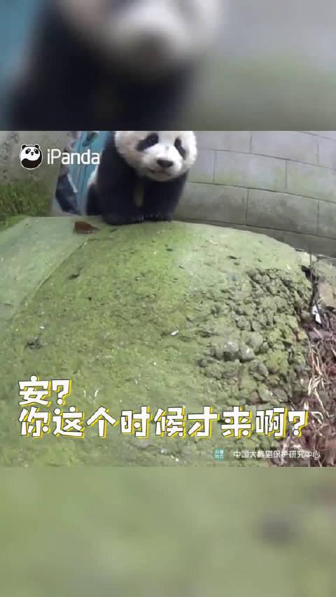 熊猫:这就是你们对国宝的态度?