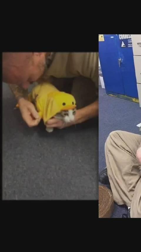 印第安纳州监狱里面的犯人只要表现好,就可以在监狱里领养一只猫咪