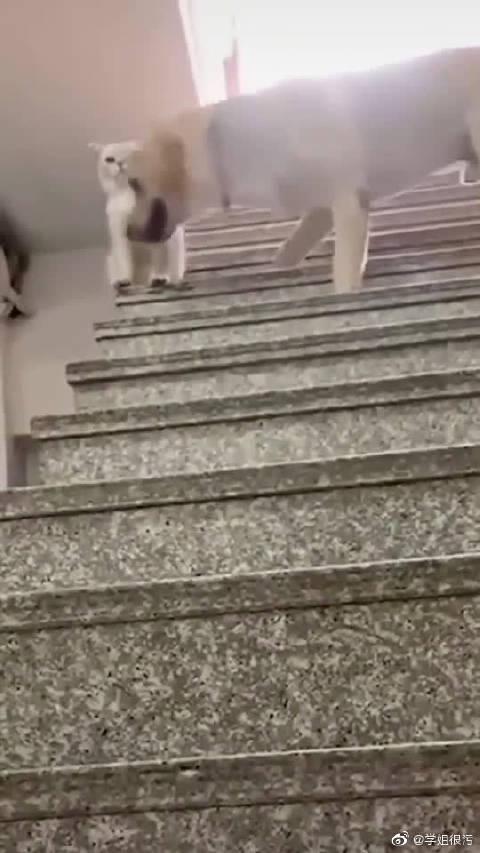 猫大哥万万没想到,狗子会来这招。