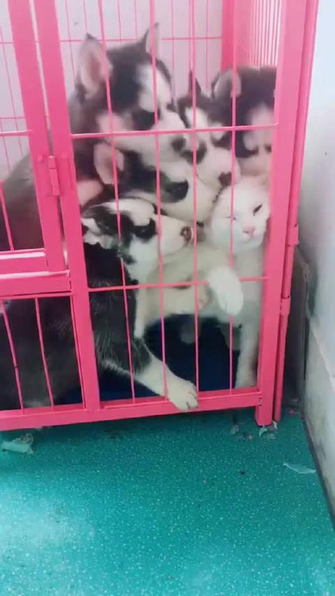 白雪公主和七个小舔狗