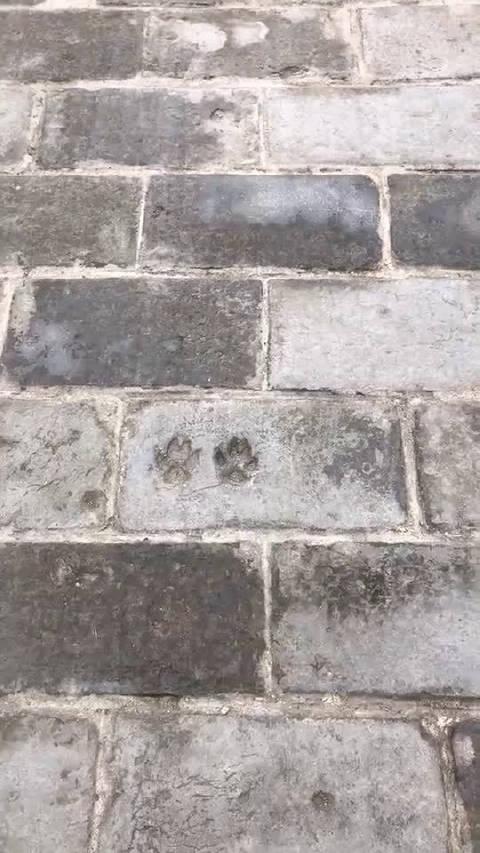 西安城墙上地砖留下的狗脚印有哪位大神解释一下是什么意思?