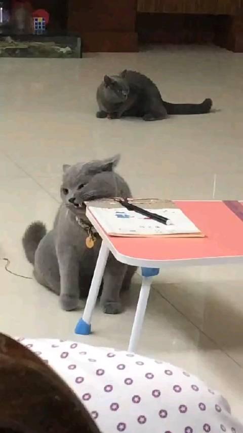 老师,我的暑假作业被猫吃了,说出来你可能不信,有视频为证。