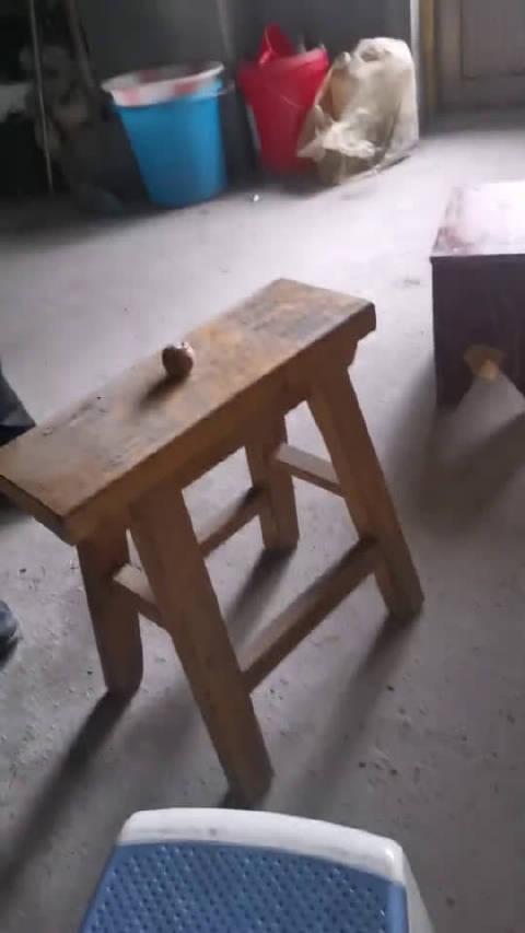温馨提示小凳子请在大凳子的陪同下观看