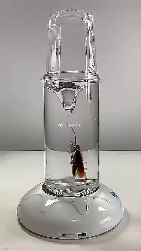 蟑螂:这是人干的事吗?