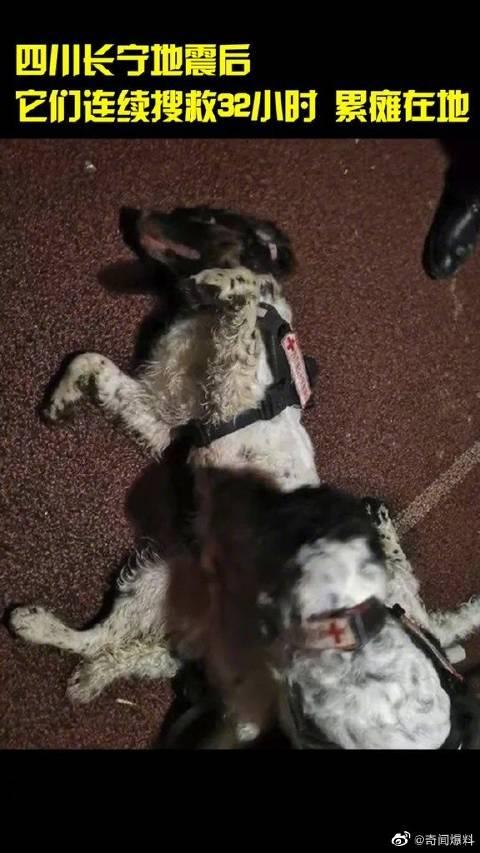 """感动!深夜时分,搜索排查一天的搜救犬""""大懵""""和""""巴库""""……"""