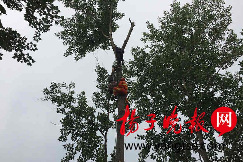 伐木工爬树时安全绳突然断裂 头朝下被困树上