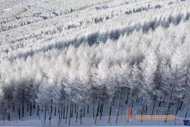 雪是怎么形成的_形成雪凇的崇礼万龙滑雪场.