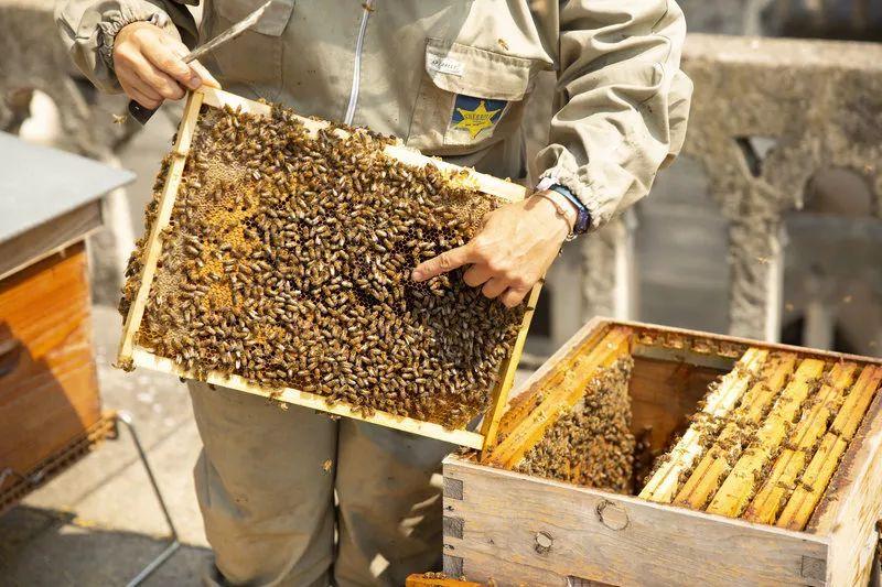 """蜜蜂被大火中的二氧化碳薰""""醉了"""""""