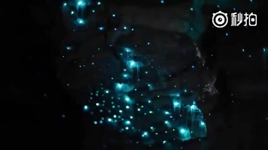 新西兰萤火虫洞,美到不敢眨眼。10秒关灯的那一刻