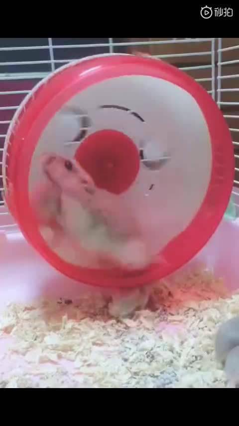 小鼠:妈妈我不想玩......大鼠:不,你想