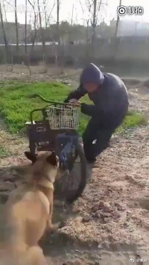 中华田园犬诠释一个字——忠!狗虽然不会说话,但它什么都懂。