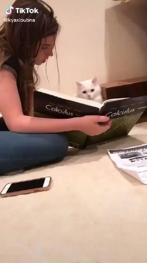热心的主人给猫咪讲微积分……猫:????