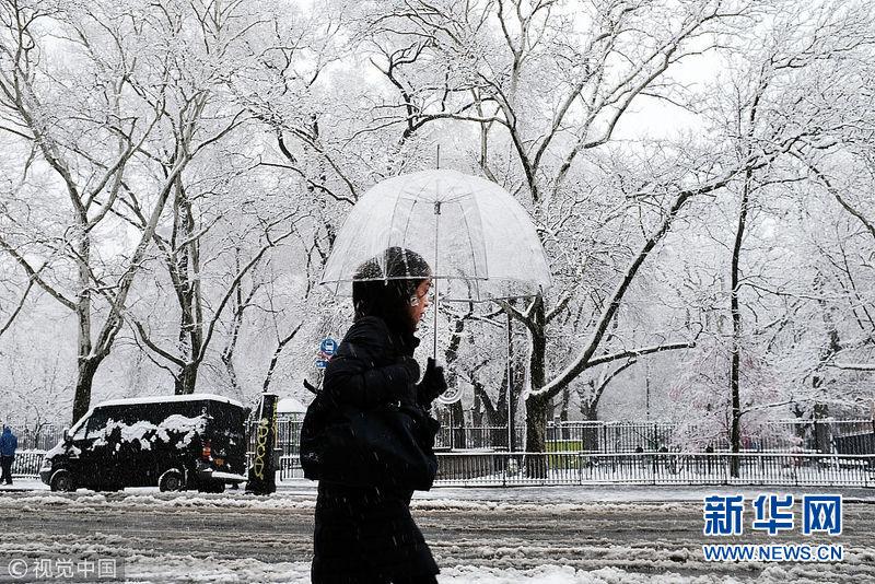 美国遭遇春季暴风雪 鲜花雪中绽放