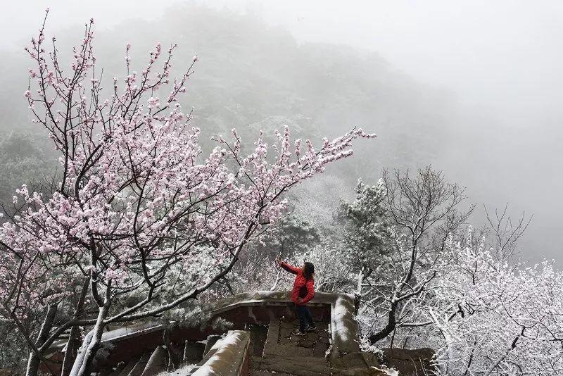 暴雪预警!天津今晚中雪!下出难得雪中花,美到心醉!
