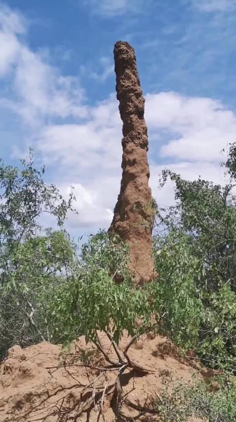 非洲的蚂蚁窝都这么大