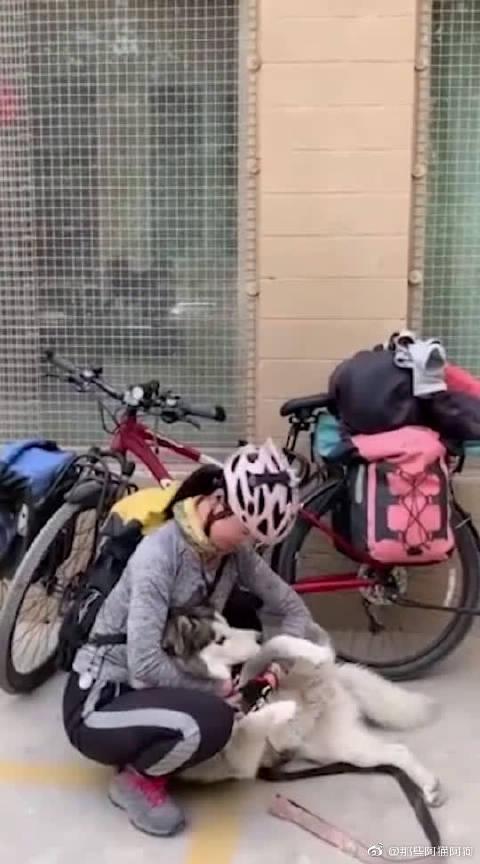 二哈:我太难了,刚陪爸爸去西藏骑行几个月,又要陪妈妈出去了