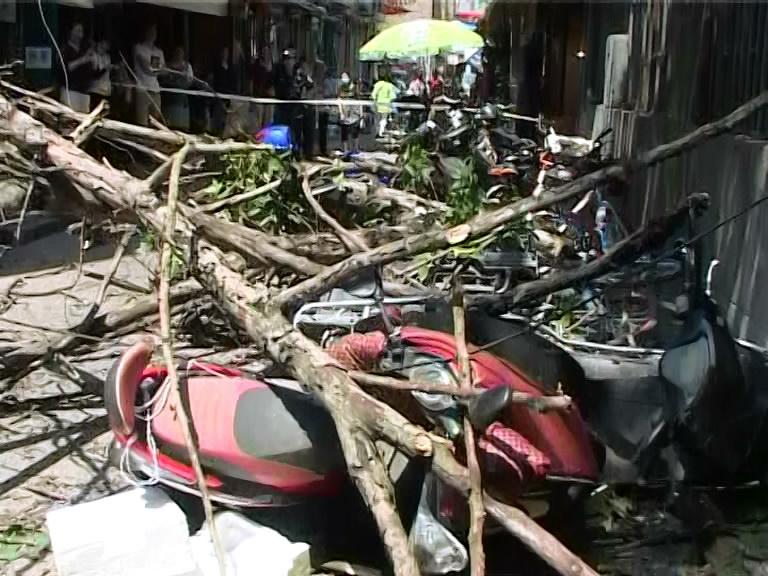 视频│大风刮断树杈砸伤过路女子