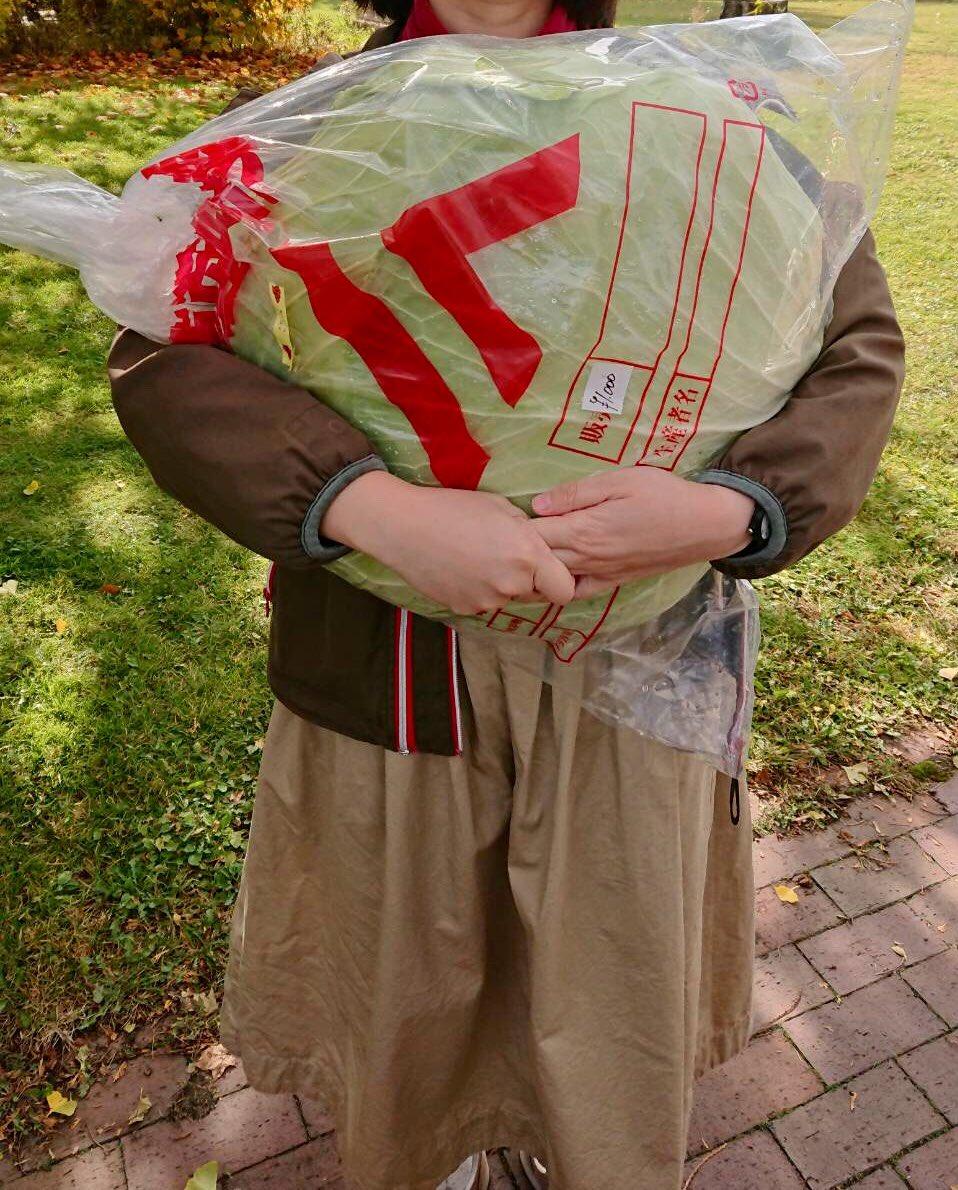 日本男子正在北海讲购到的巨型卷心菜(maidona消息)