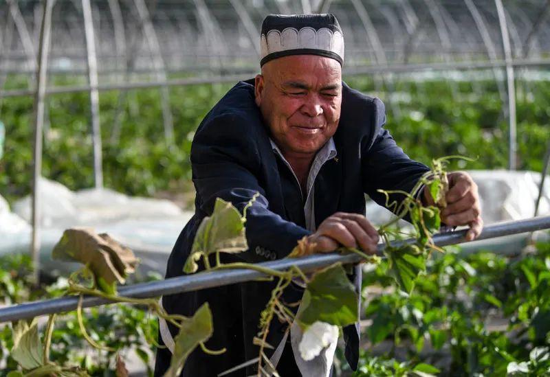 2020年5月23日,在新疆莎车县乌达力克镇博依拉村,农夫在田间劳作(图源:新华社)