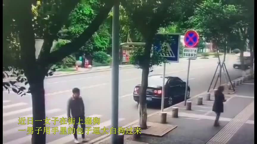 """""""人碰瓷狗"""" 骗局"""