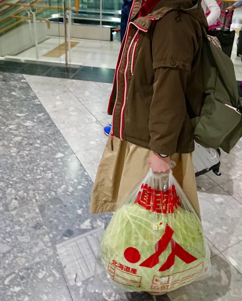 """该卷心菜的种类为""""札幌年夜球""""(maidona消息)"""
