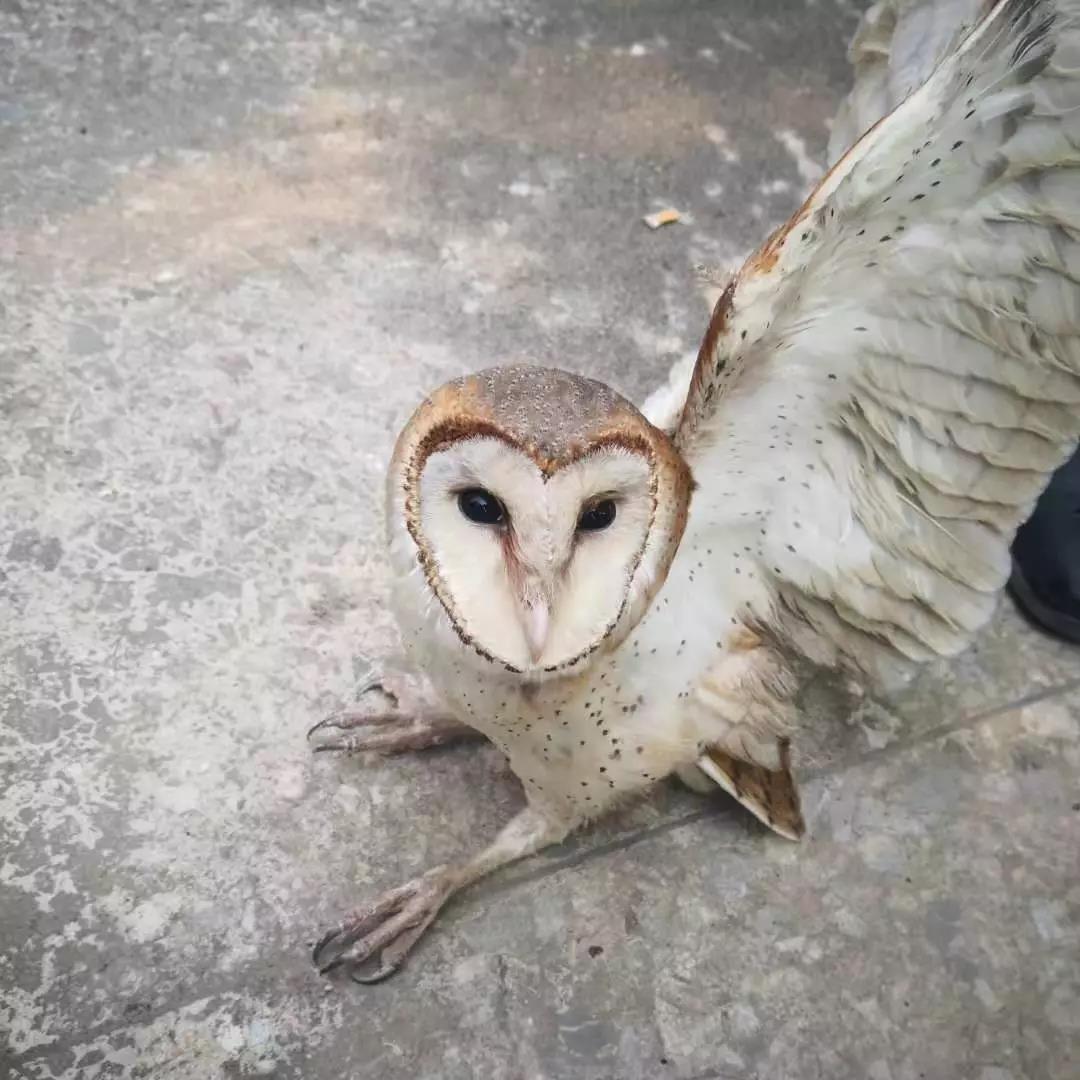广西男子偷运国家二级野保动物猴面鹰被刑拘