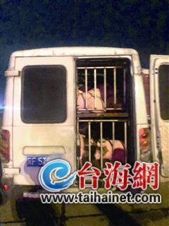 客车座位改成猪笼竟然装了几十头猪